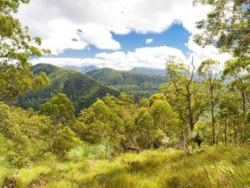 Sherwood Lookout, Toonumbar National Park. Photo: Hamilton Lund/Destination NSW