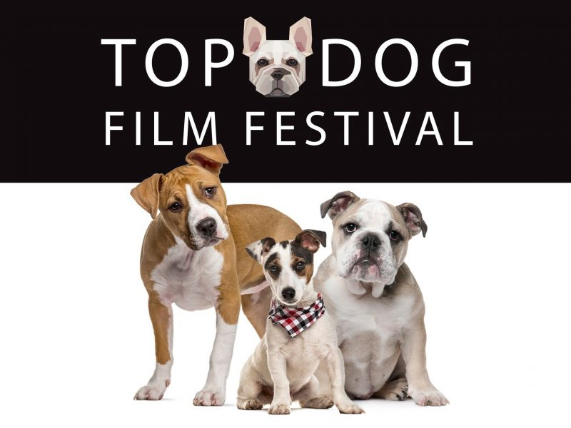Top Dog Film Festival logo and promotional photograph