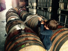 The winemakers son learning the trade
