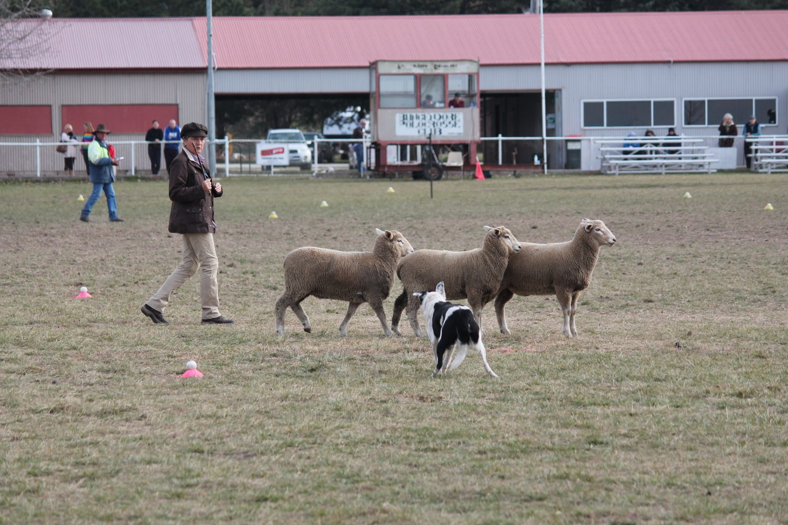 Whip showing her sheep moving style