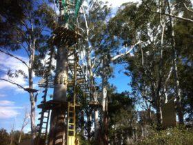Trees Adventure Hawkesbury