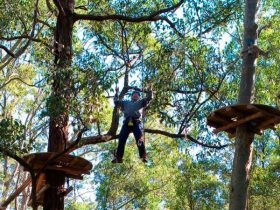 Tree Top adventure park, Blue Gum Hills Regional Park. Photo: John Yurasek