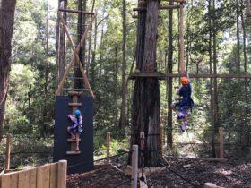 TreeTop Vertical Challenges