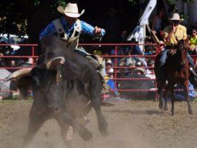 Tumbarumba Rodeo