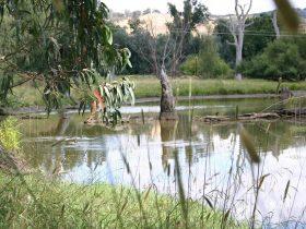 Tumut Wetlands Snowy Valleys NSW