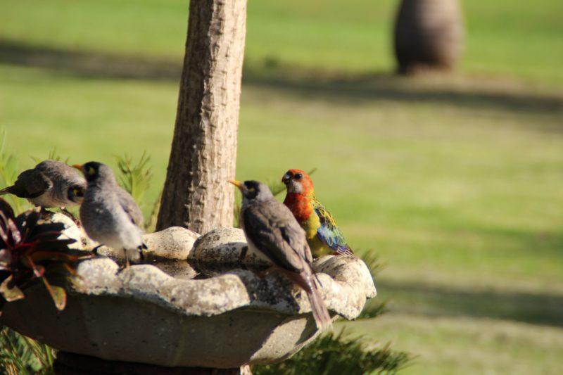 Birds bathing