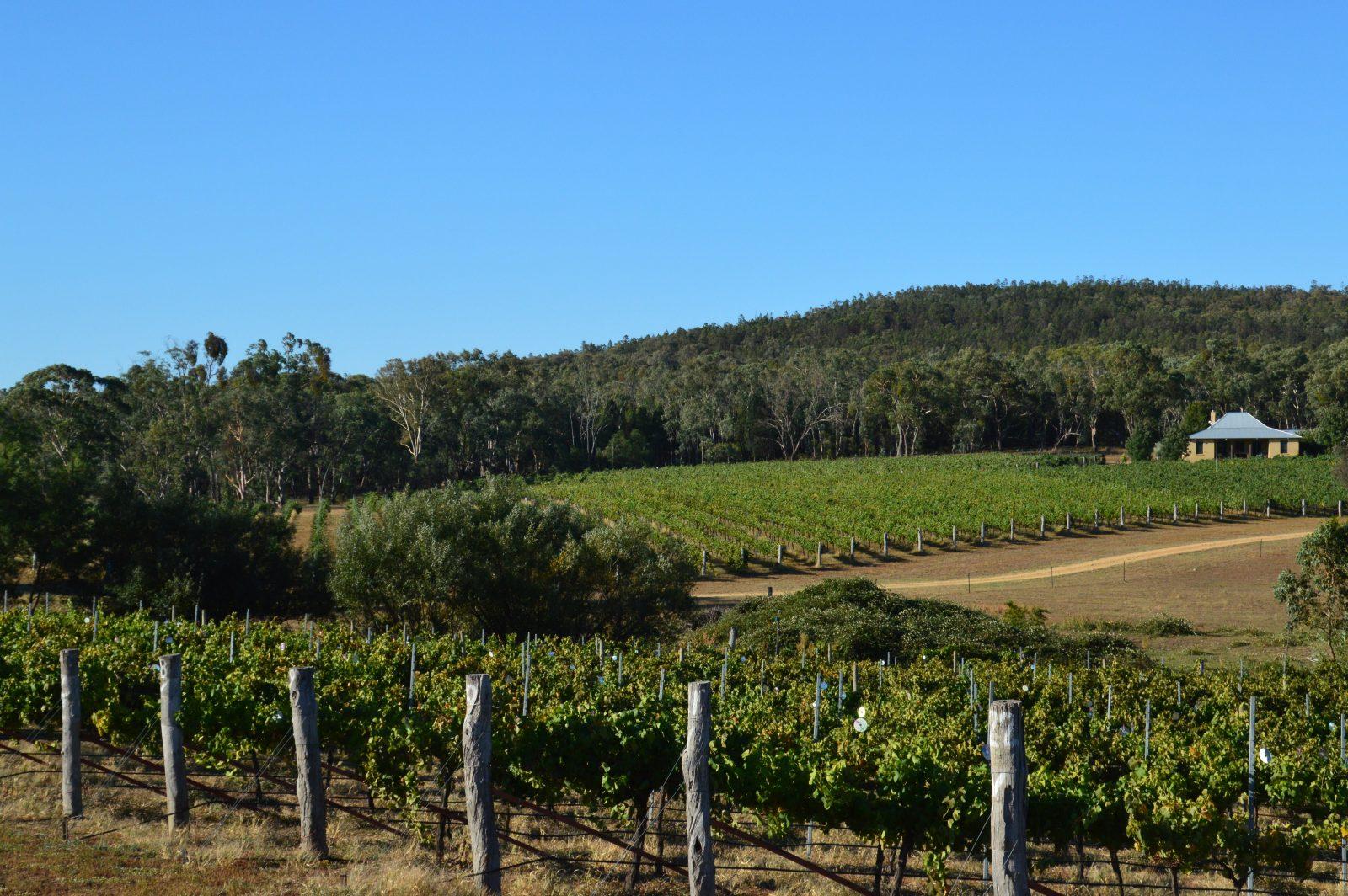 Vineyard and homestead