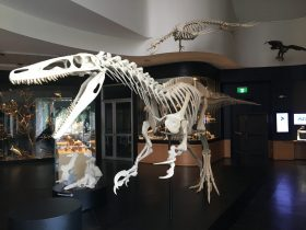 Discover life at the Natural History Museum