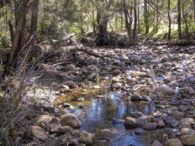 Upper Bullawa Creek picnic area, Mount Kaputar National Park. Photo: Boris Hlavica