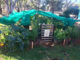 Urana Straw Bale Garden