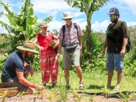 East Coast Australia Tour - Byron Bay Organic Farm Experience