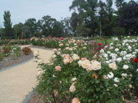 Victoria Park Rose Garden
