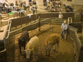 Livestock Marketing Centre
