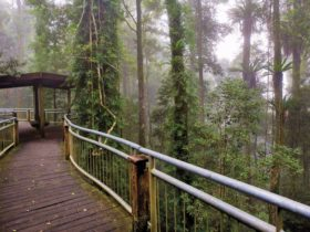 Walk with the Birds boardwalk, Dorrigo National Park. Photo: Rob Cleary