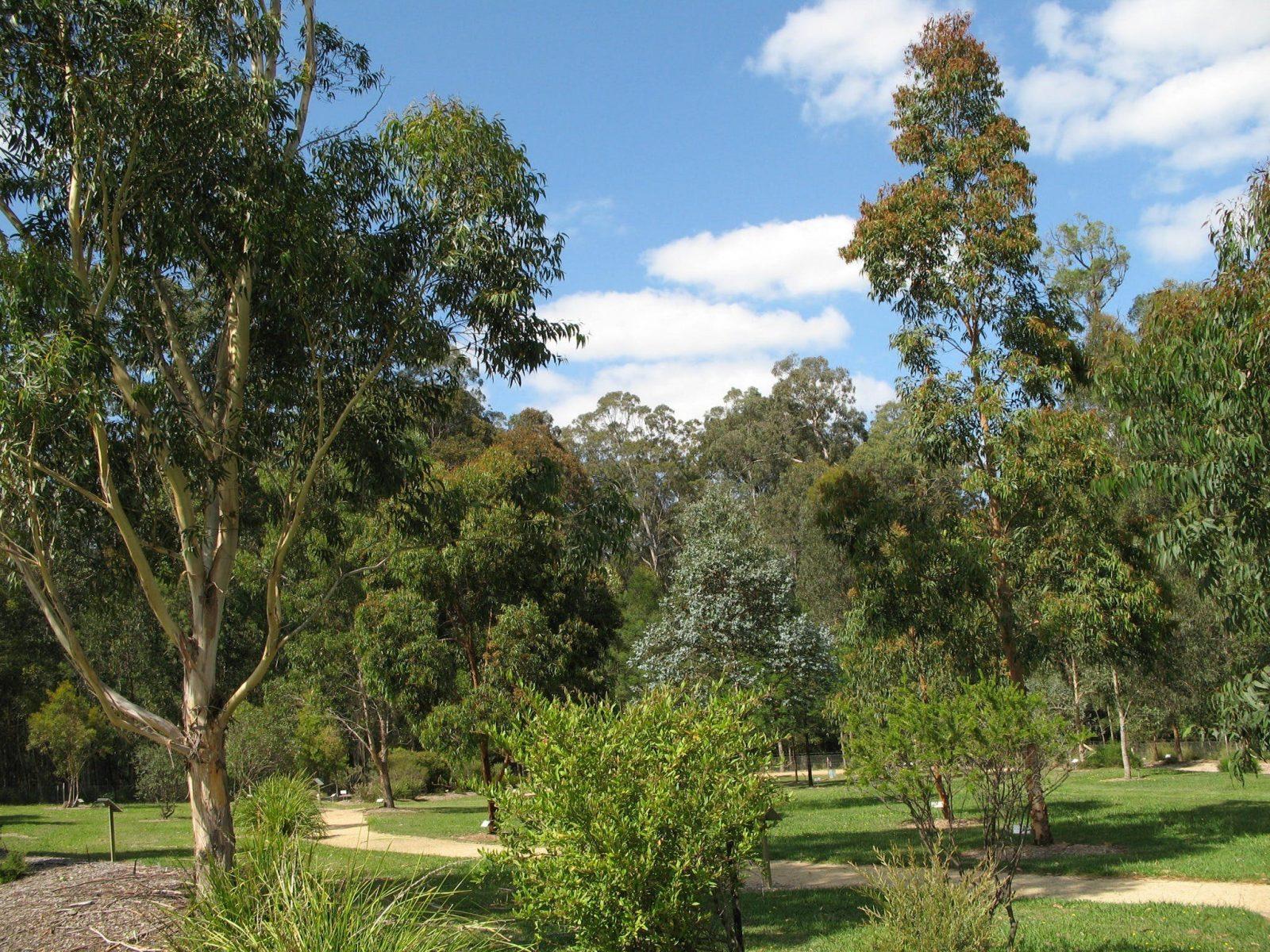 arborium