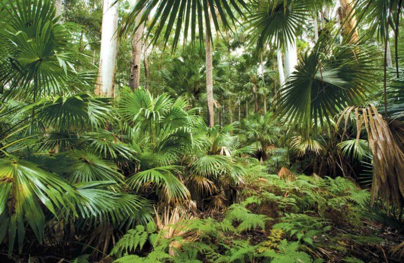 Sugar Palms, Wallingat National Park. Photo: Ian Brown/NSW Government