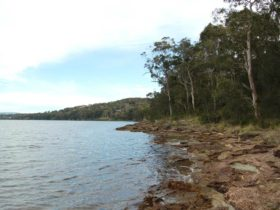 Wangi circuit walking track, Lake Macquarie State Conservation Area. Photo: Susan Davis.