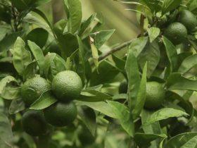 Watkin's Orchard