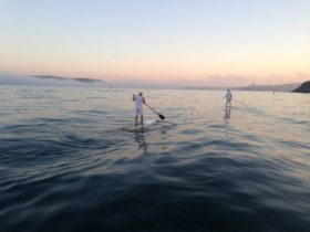 Stand up paddling, Sydney harbour