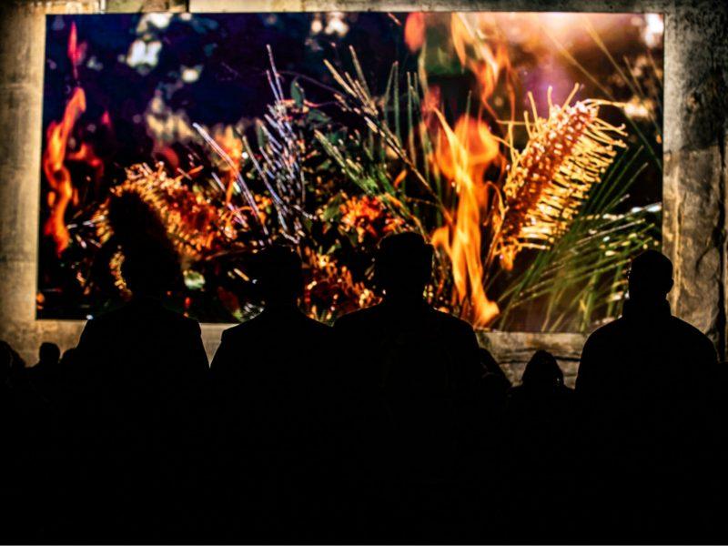 Photo of Wellama - a 10 minute audio visual artwork, by Alison Page and Nik Lachajczak.