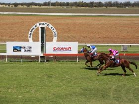 Pop along to the Moree Race Course on the 31st August & 1st September 2019.