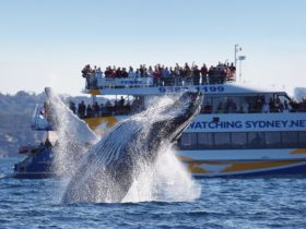 Bass and Flinders Cruises