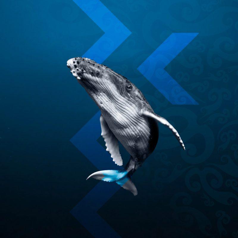 Whales | Tohorā exhibition at the Australian Museum