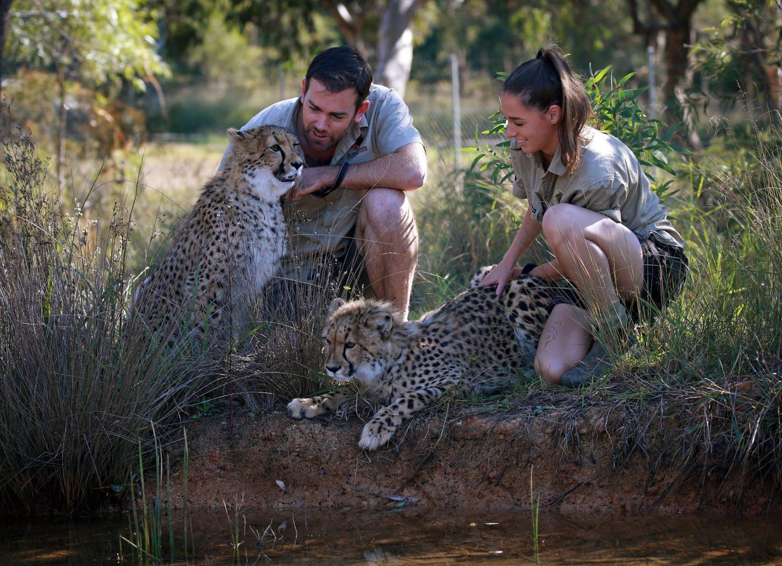 Wild Animal Encounters Cheetah