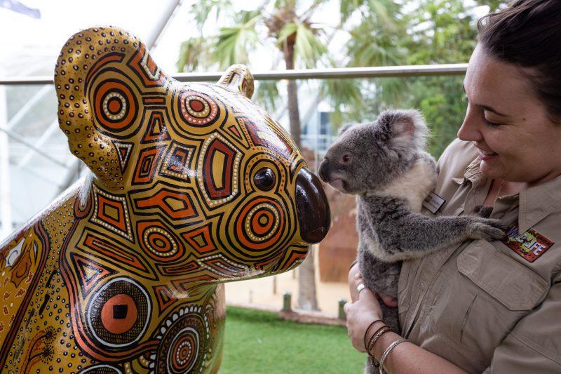 Hello Koalas at WILD LIFE Sydney Zoo