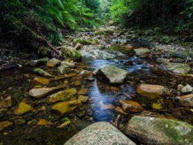 Rivulet, Willi Willi National Park. Photo: John Spencer