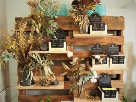 Willow Botanica