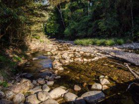 Wilson River picnic area