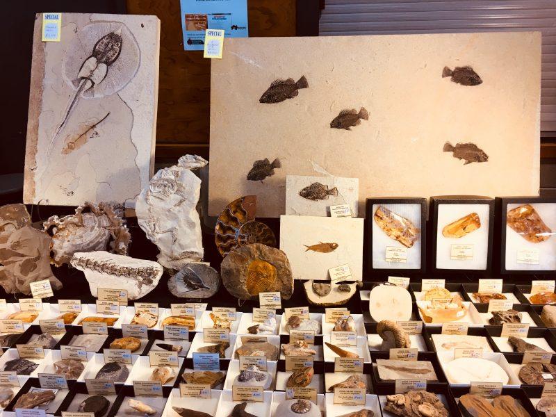 Fossils, Crystal Encounters