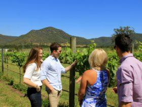 Wine Idealist Tours