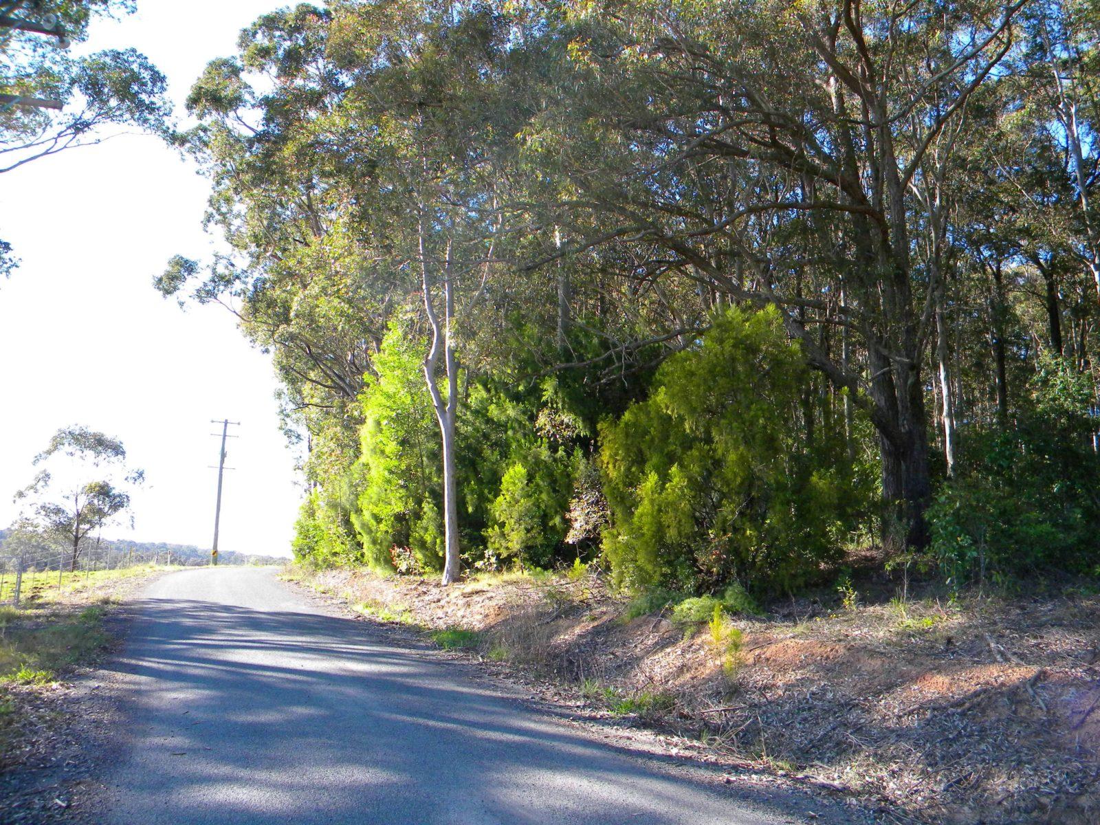 Woollamia, Shoalhaven NSW.