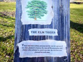Elm Trees Sign