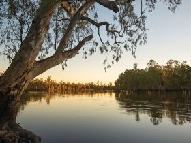 Sunset on the Murray River, Murray Valley National Park. Photo: John Spencer/OEH