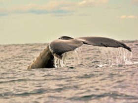 Yamba Whale Watch