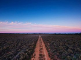 Follow the dirt track to Yanga National Park. Photo: David Finnegan.