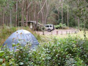 Youngville campground, Mount Royal National Park. Photo: Susan Davis.