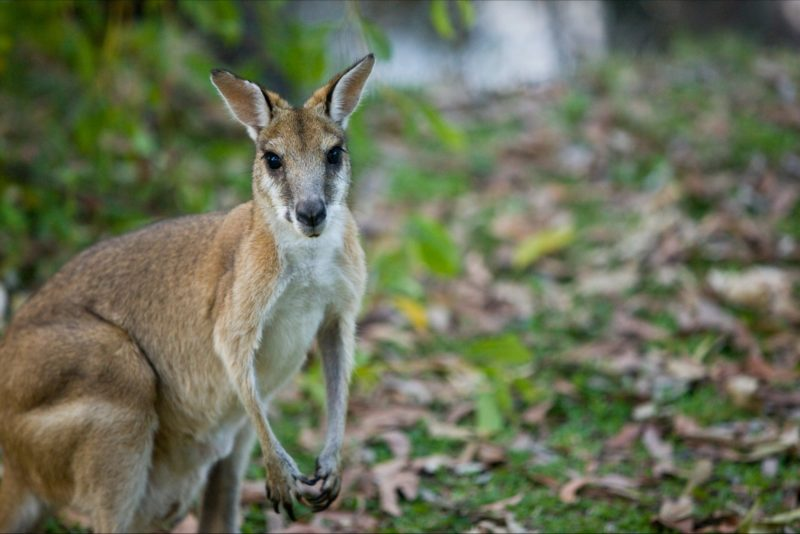 Wildlife spotting in Katherine Region