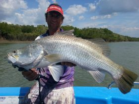 Darwin Feeder Creek Barramundi