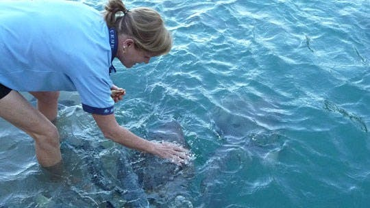 Aquascene, Darwin, Northern Territory, Australia