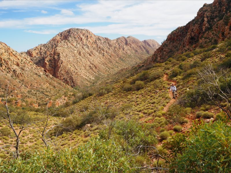 Trekking the Larapinta Trail
