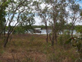 Bird Billabong, Mary River area, Northern Territory, Australia