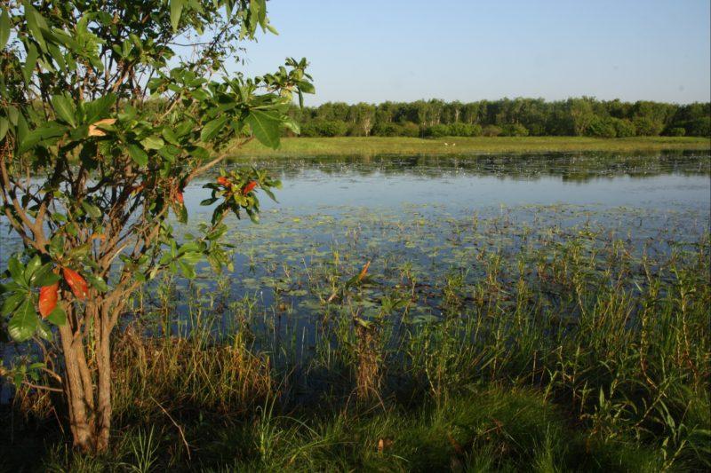 Bubba wetlands walk