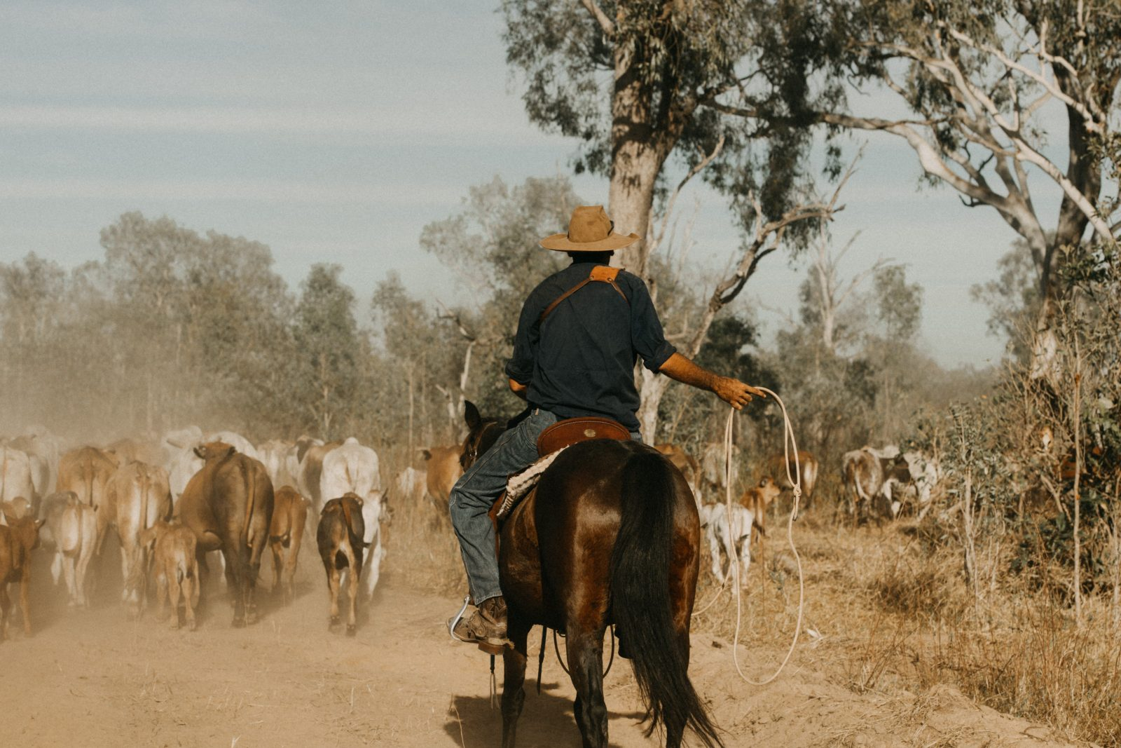 Immerse yourself in a working cattle station and see what goes on