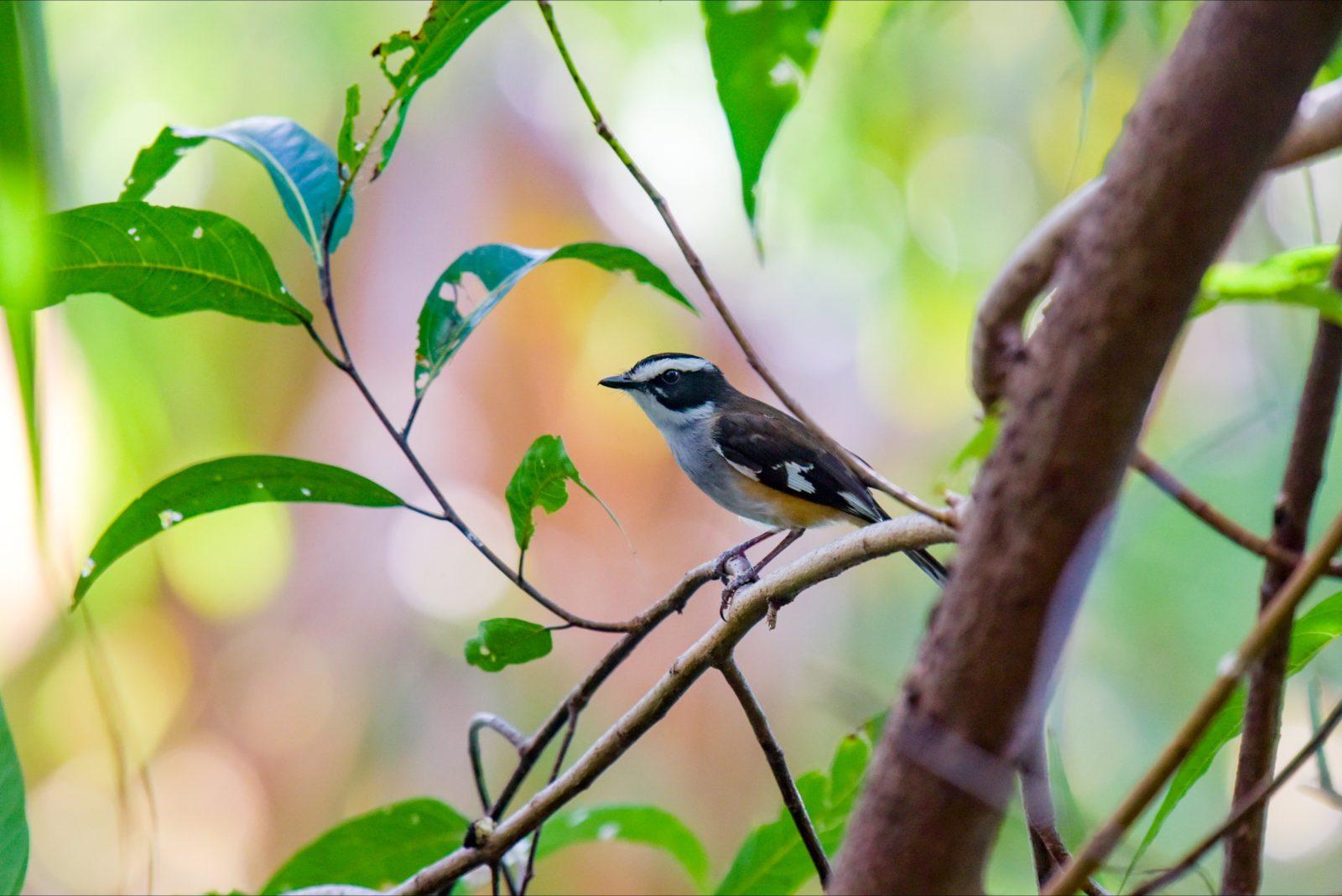 Timber Creek Bird Life