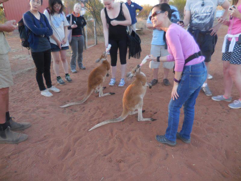Kangaroo Sanctuary Experience