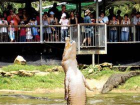 Crocodylus Park